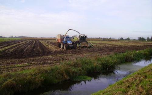 Linschotem oktober 2008: maïs eraf; sporen zijn voor later!