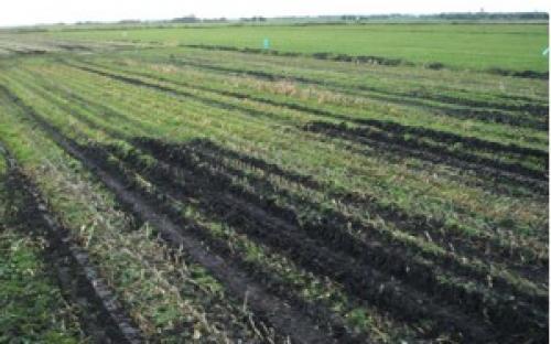 maisoogst veen sporen bij strokenteelt en spitten